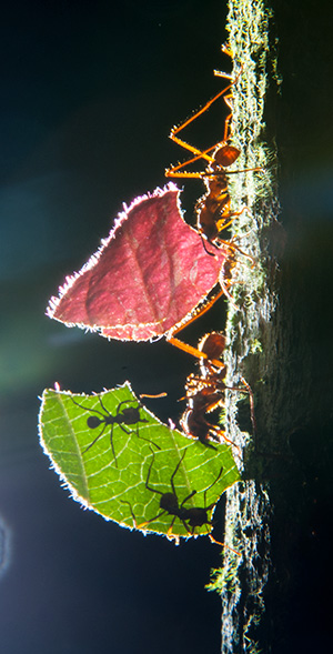 bz12_ants2977bh300