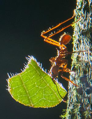bz12_ants2985bh300