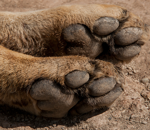 Kitty paws© 2013 Diane Kelsay