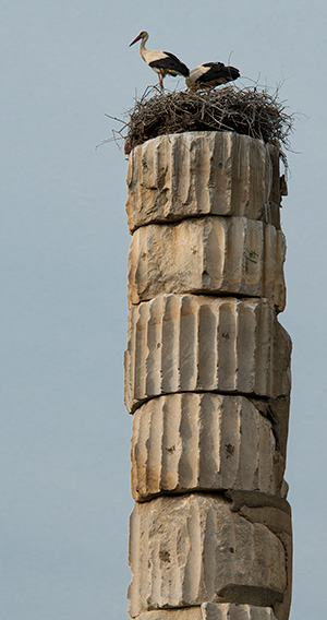 Artemis column with stork nest© 2013 Bob Harvey