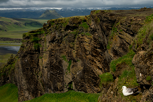 Cliffs, adorned by fulmars©Bob Harvey, 2013