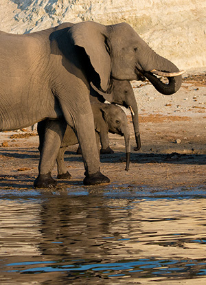 bt13_elephants4835bh300