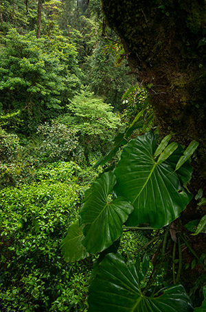 From a canopy trail, close to what lives up high. © 2014 Diane Kelsay