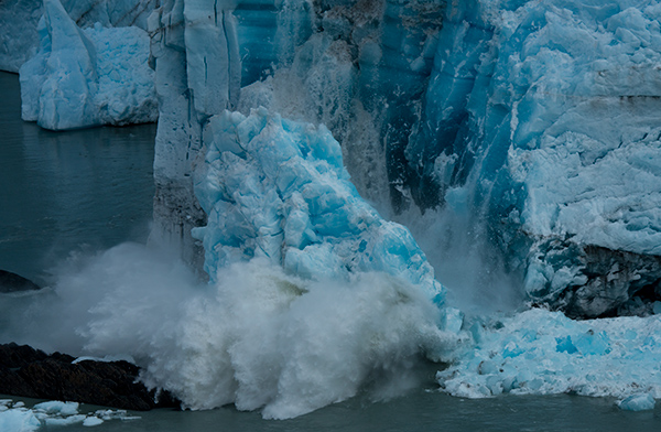 The glacier calves with a spectacular display of power, revealing a deep blue wall. © 2014 Diane Kelsay