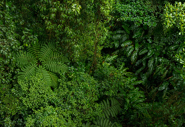 Rainforest from a canopy trail © 2014 Diane Kelsay