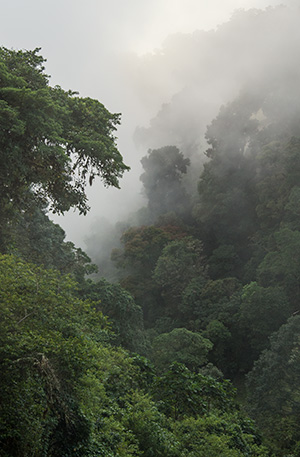 Cloud forest, near Los Quetzales National Park © 2014 Diane Kelsay