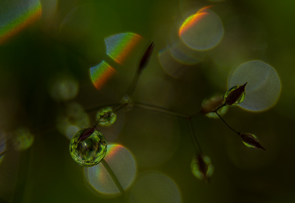 Out of focus drops form prisms © 2014 Diane Kelsay