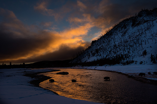 Sunrise on the Madison River © 2015 Bob Harvey