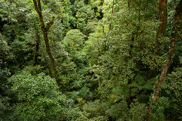 View from canopy bridge on the Heliconias Trail © 2015 Diane Kelsay